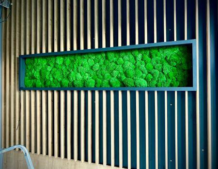 Machové steny a obrazy