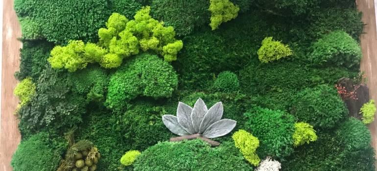Stabilizácia machu a rastlin