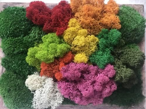 Farebná variácia