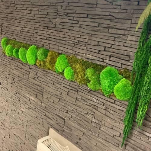 Machové steny